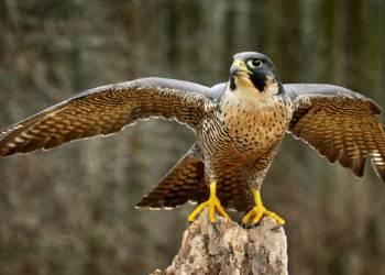 0917_falcon