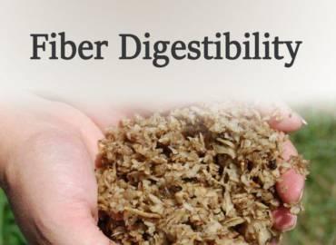 1-Fiber Digestibility