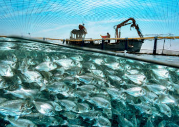 Mediterranean fish farm. Split-surface view of a fisherman preparing to feed fish (bottom) in a fish farm in the sea, with the net visible at top. The farming of fish and other marine organisms is known as aquaculture. Photographed in 2018 in the Mediterranean Sea.
